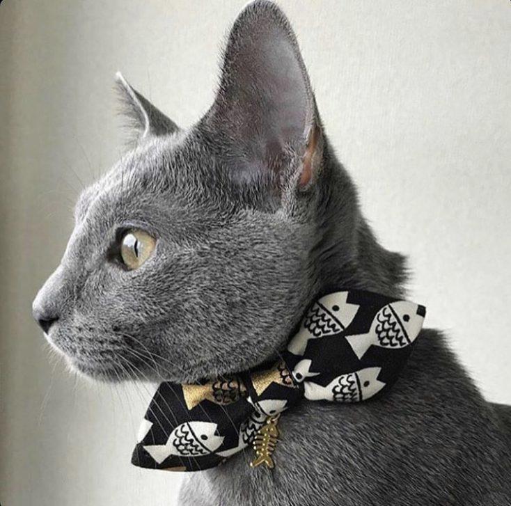 LEO THE CAT.